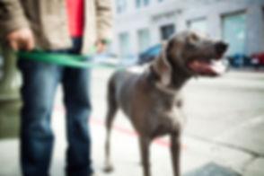 散歩に犬を撮ります