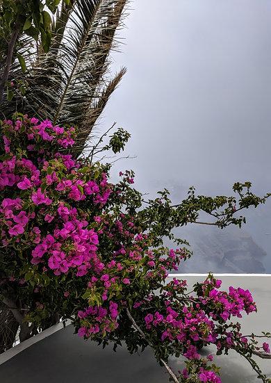 Santorini  - Bougainvillia in the Mist, Initial Print