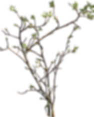 branches_2_by_passagere_da-d4xmblb.png
