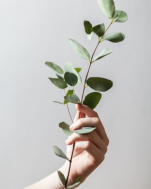 hand-holding-green-leaves-branch-Stock-P
