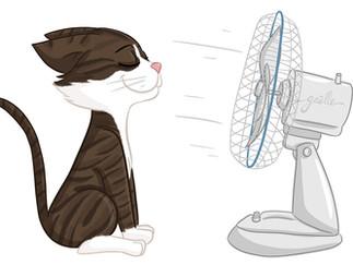 Petites astuces pour prendre soin de son chat en été