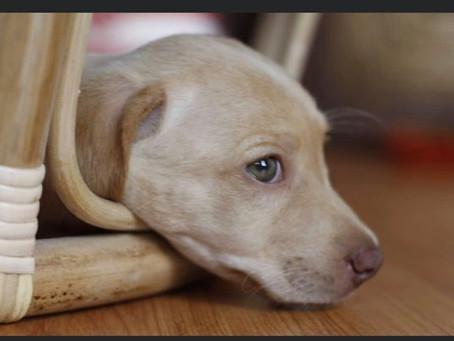 Mi experiencia cuando decidí adoptar un perro