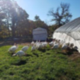 We have 3 fresh turkeys left. 21-22lbs.