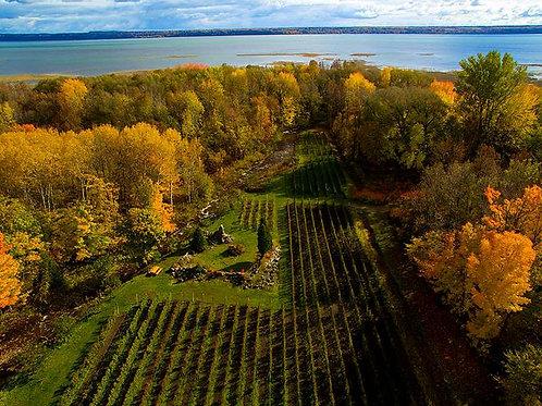 Circuit vins et fromages   Visite libre des lieux