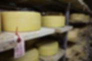Organic Cheese Dairy