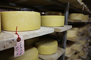 Organic Cheese Dairy