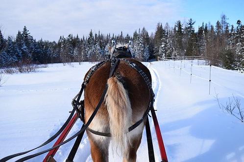 Forfait équitation | Randonnée attelée