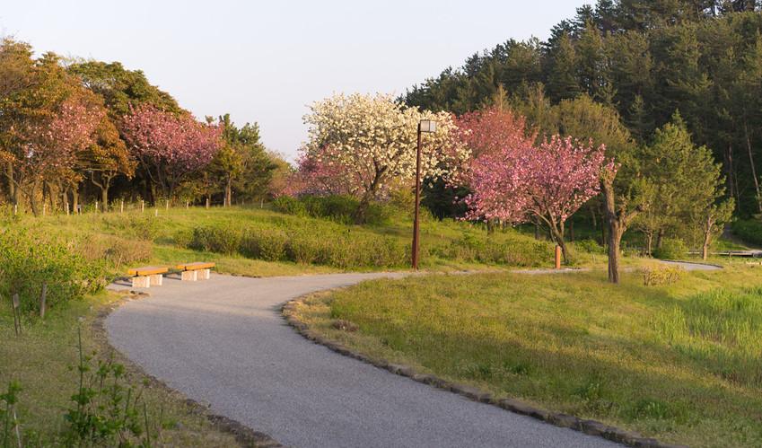 The Imoriyama Park