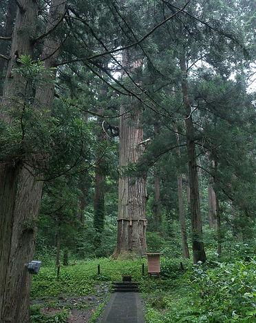 Grandpa Cedar Mt. Haguro Shugendo Yamabushi Dewa Sanzan