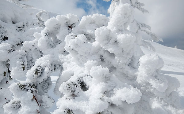 Zao Snow Monsters-1-4.jpg