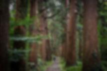 The stone path of mt. haguro.