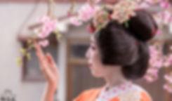 Somaro sakura in the spring.