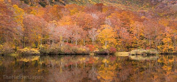 The fall colors of yamagata.