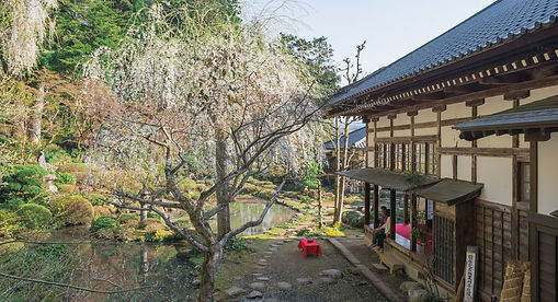 Sakura Cherry Blossom blooming in the gardens of Gyokusenji Temple in Tsuruoka