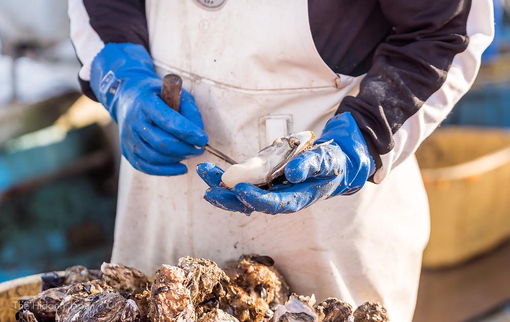 Miyagi oysters in Ishinomaki City