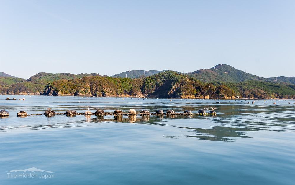 Oyster farms in Miyagi Prefecture