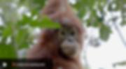 Screen Shot 2019-05-01 at 09.28.49.png
