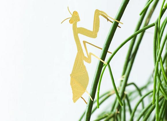 Plant Animal Praying Mantis