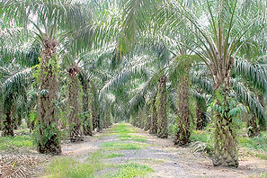 palmtttttrees.jpg