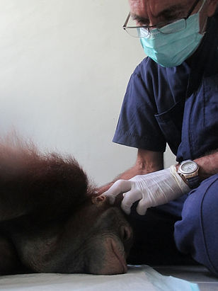 Co-founder of Orangutan Veterinary Aid (OVAID)