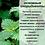 Thumbnail: Шампунь для ежедневного применения с пантенолом, крапивой и зелёным чаем.