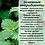 Thumbnail: Бальзам для ежедневного применения с кокосовым, касторовым маслом и крапивой