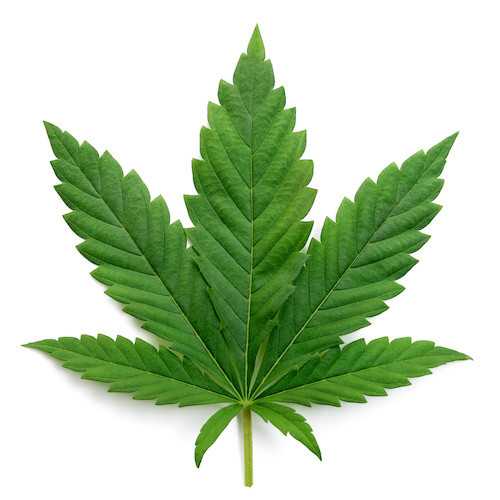 Consequences of a Marijuana Addiction: Psychological