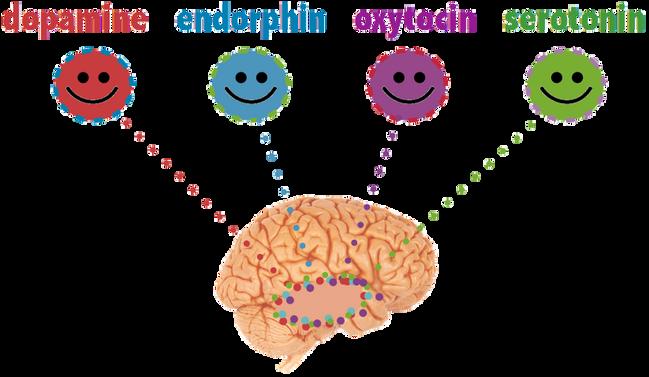 Chemical Communicators: How Drugs Speak To The Brain