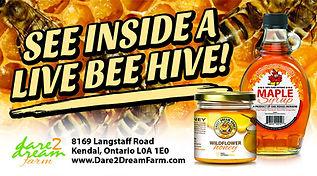 see inside a live bee hive.jpg