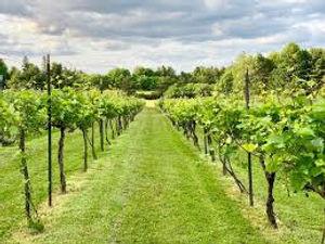Sugarbush Vineyards