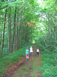 Ganaraska Hiking Trail_019.JPG