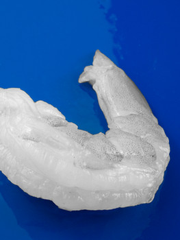 shrimp_3xxxx copy (002).jpg