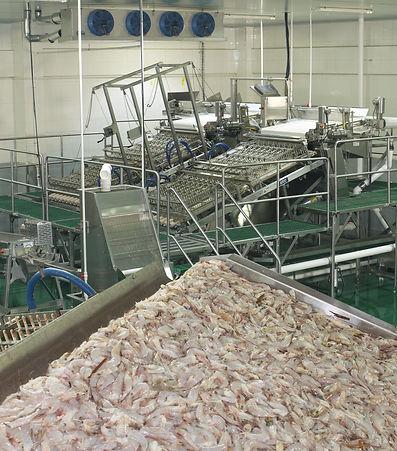 Shrimp Peeling System Laitram