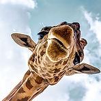 safari.jpeg