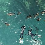 Snorkel with seal.jpg
