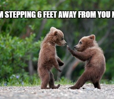6 Feet Away Bears