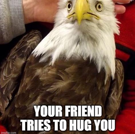 That Moment When Eagle – Hug