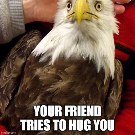 That Moment When Eagle – Hug