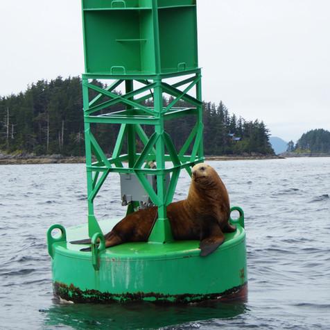 sea lion-edited.jpg