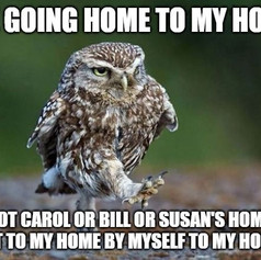 Owl Social Distancing