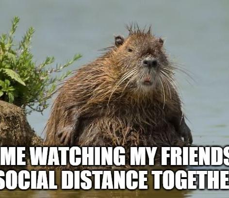 Beaver Social Distancing