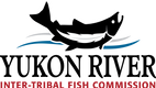 YUKON RIVER ITFC LOGO FULL COLOR 300.png