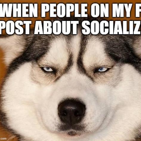 Social Distancing Husky