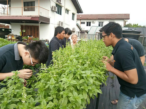 Urban farming plot at House of Light