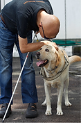 Malaysia's first recognised guide dog LaShawn