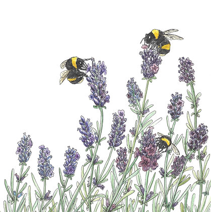 Bees and Lavender Card