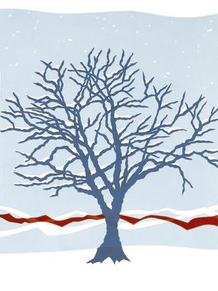 winter tree.tif