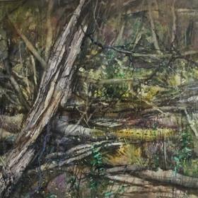 Carol Hill RBSA, Regenerating Woodland 2