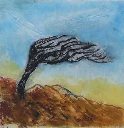 Windswept, Linda Nevill