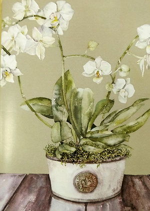 Moth Orchid in Kew Pot Card